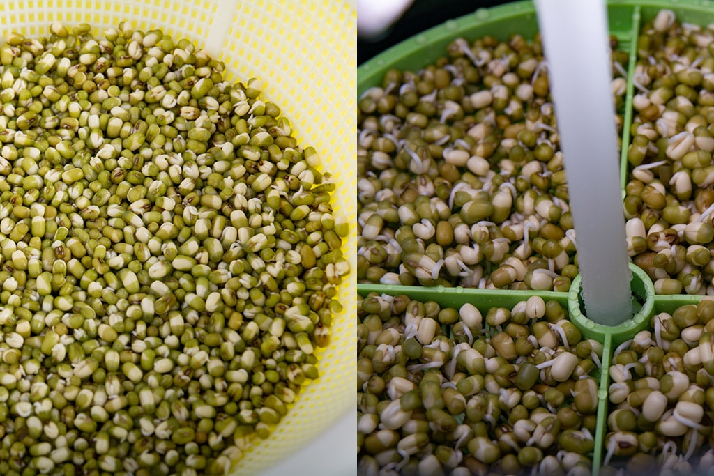 Side by side pictures of the two methods of growing sprouts on day 2.